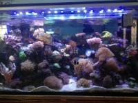 Освещение аквариума: выбор ламп, какие лучше? Инструкция с фото и видео!