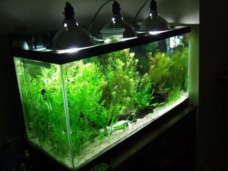 Светодиодный для аквариума своими руками