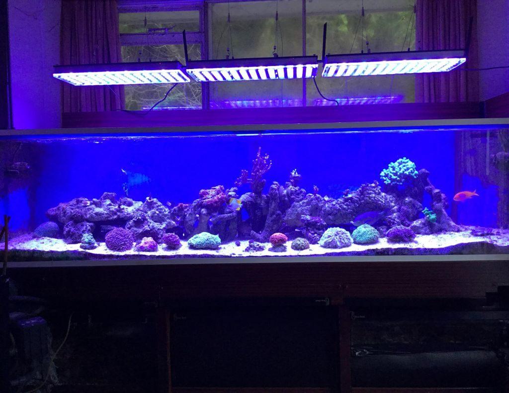 Освещение аквариума своими руками: мощность ламп, их тип 26