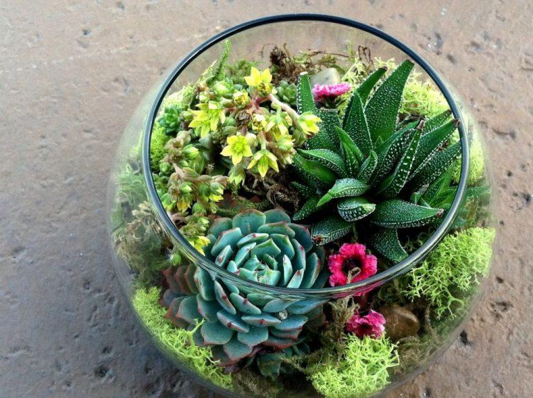 Фото террариумов для цветов