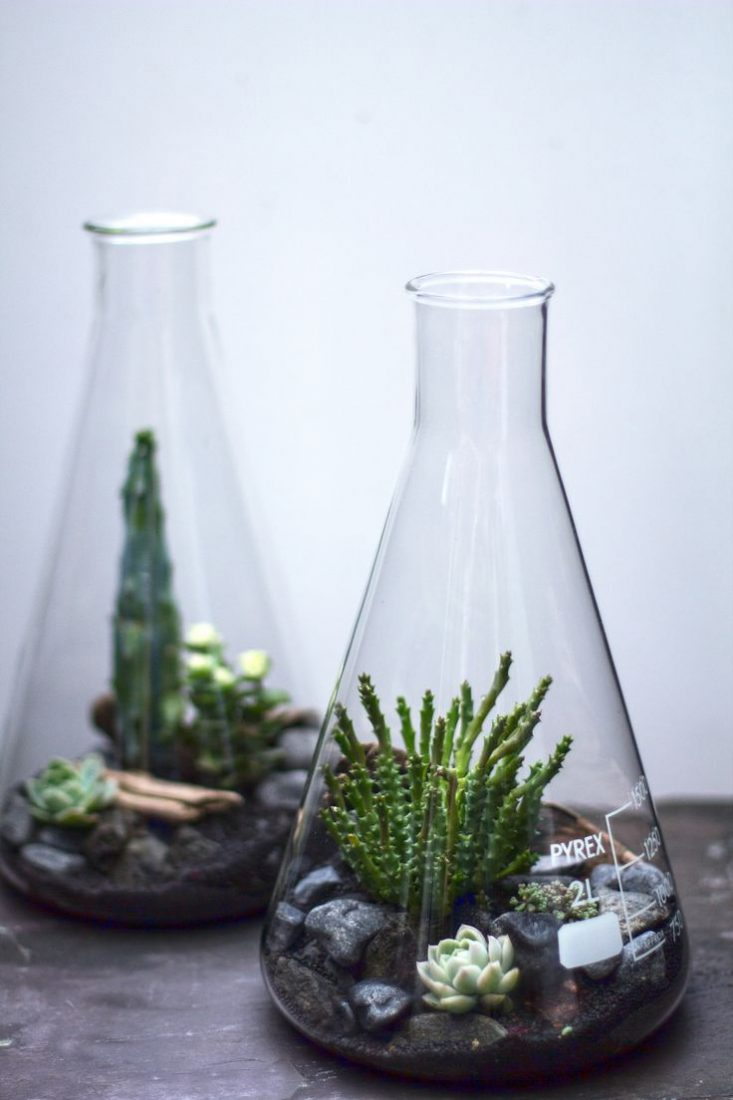 pop bottle terrarium bean plant experiment The 11 best plants to grow in your terrarium  a bright pop of color amidst darker-color plants  performs well in bottle terrariums is.