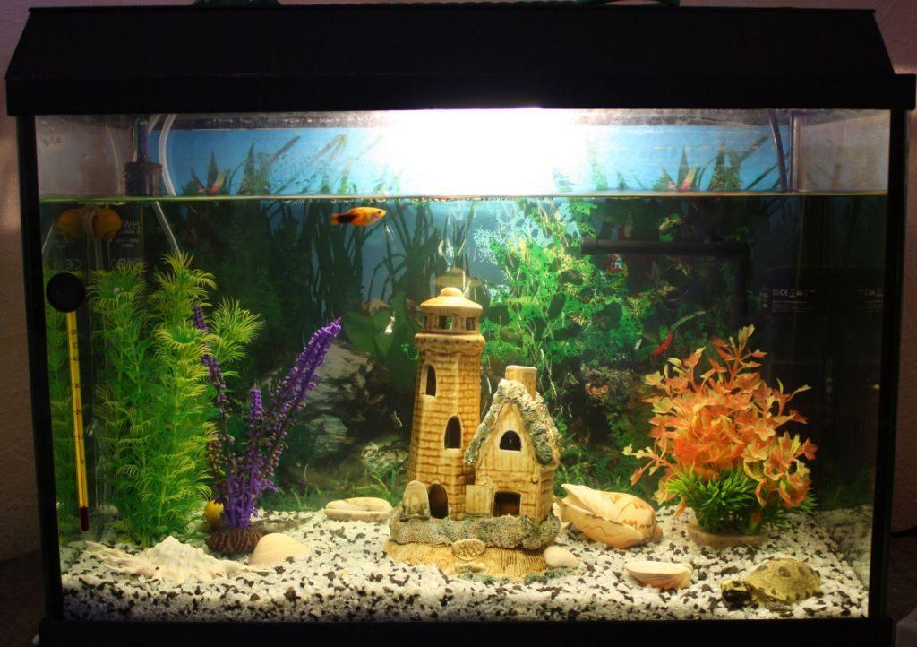 Рыбки для аквариум в домашних условиях 163